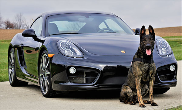 dog breeds for protection dogs and security services
