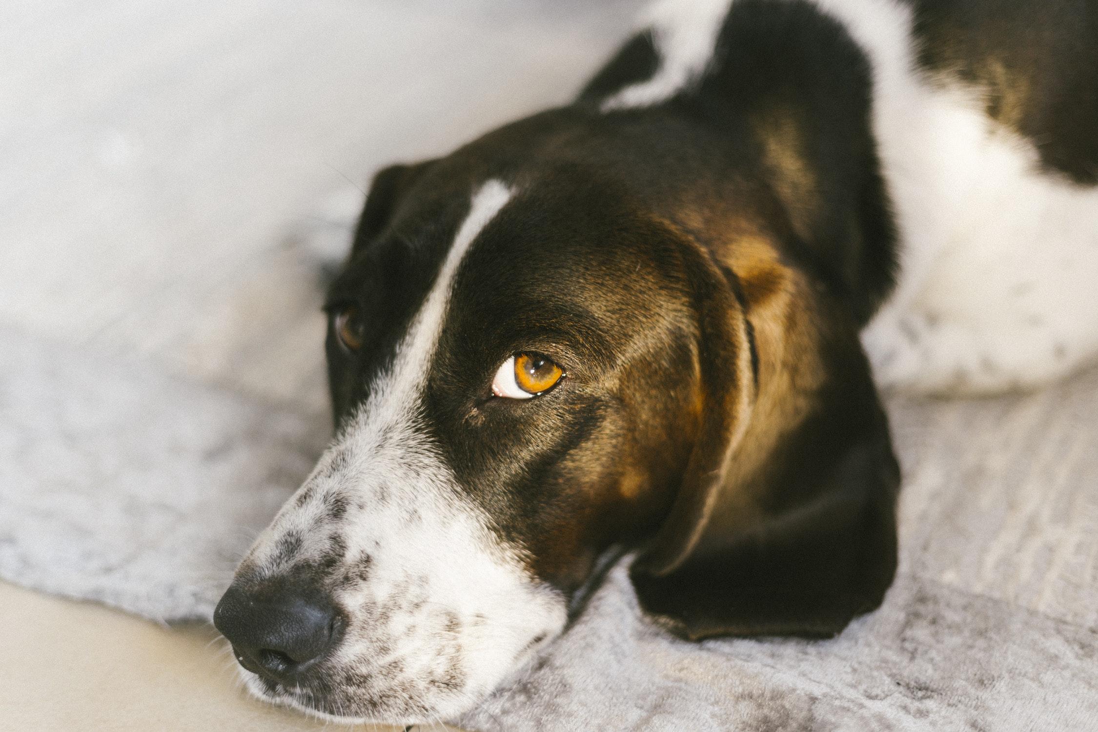 Columbus Ohio Franklin County Dog Shelter Open House