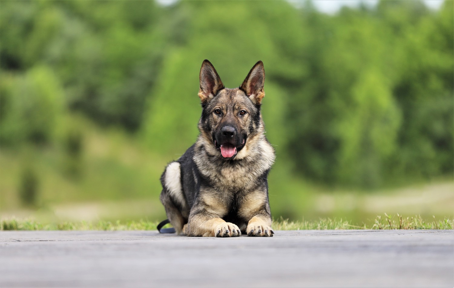 types of protections dogs